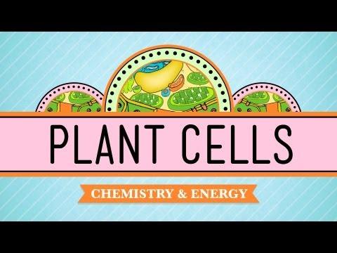 Pflanzenzellen