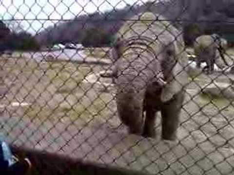 ¡Que grocero elefante!
