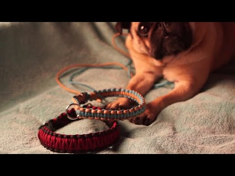 DIY Paracord Hundehalsband