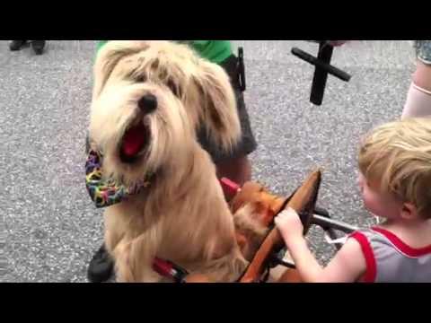 Dog marionette