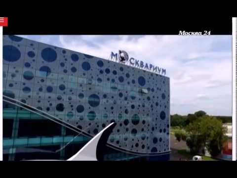 Центр океанографии и морской биологии «Москвариума» на телеканале Москва-24 (видео)