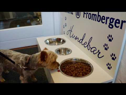 Tutorial Hundebar - Wir bauen eine Hundebar