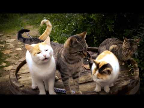 Meow Meow Lullaby