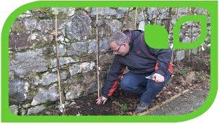 Wie hoch und wie tief müssen Obstbäume gepflanzt werden?