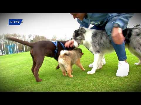 Mascotas Oviedistas: BADY