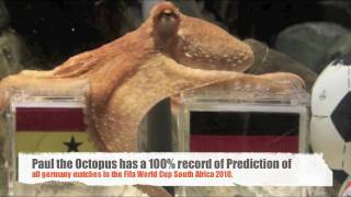 Video The Life, Story and Prediction of Paul the Octopus ( Part 1) MP3, 3GP, MP4, WEBM, AVI, FLV Agustus 2018
