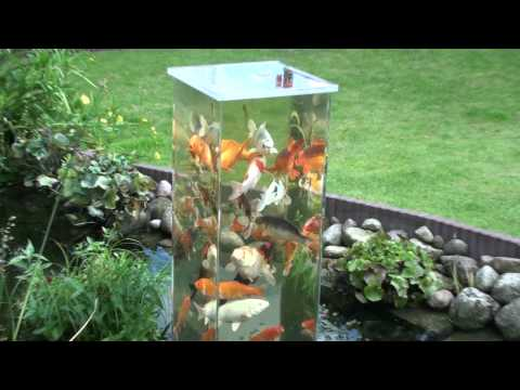 他把一個玻璃水槽「顛倒過來」放在池塘裡,而裡頭錦鯉的反應令人完全移不開眼睛!