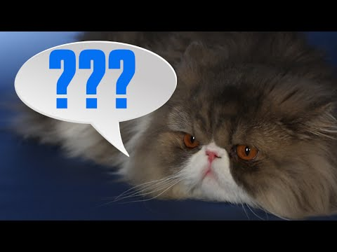 What Your Cat Is Trying To Say