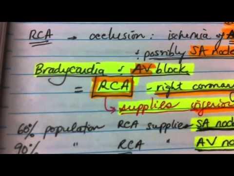 Coronary artery occlusion