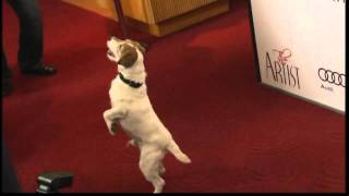 Download Lagu The best bits of Uggie the dog from 'The Artist' Mp3