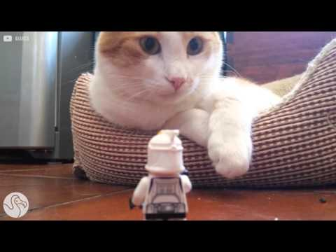 Cats Who Couldn't Care Less About Star Wars