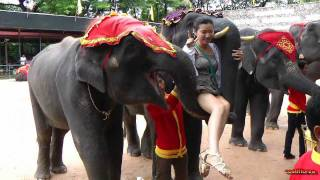Thailand - Part 3/15 - Circus Nong Nooh Village,Pattaya