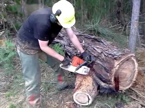 拿鋸子往樹上一砍,沒想到竟然從樹幹中流出鮮血...