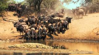 Национальный парк Серенгети (Танзания)