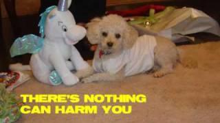 Dog Singing Toy Poodle Funny Dog Clever Dog Woofie