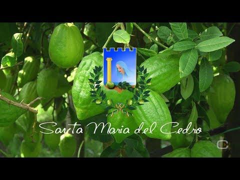 Santa Maria del Cedro :: Calabria :: ITALY ::  2017