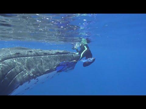 [VIDEO] Une baleine protégeant une plongeuse d