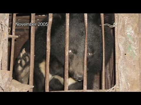 Moon Bears' Journey<br>to Freedom Part 9