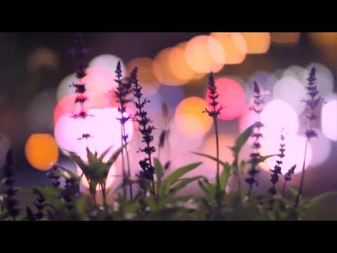Pretty Lights Music - The track is reminiscent of an earlier PL style, a classic soulful hip-hop style. The music video was created by Derek Vincent Smith (Pretty Lights) and his ...
