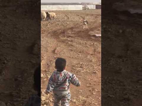 Video طفل يخاف من كلب .. مضحك download in MP3, 3GP, MP4, WEBM, AVI, FLV January 2017