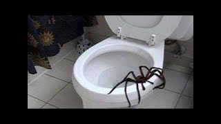 Nonton Giant Spider Attacks And Chases Two Men   Warning  Film Subtitle Indonesia Streaming Movie Download