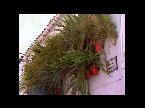 """Das Haus """"Marigloria"""", Monda"""