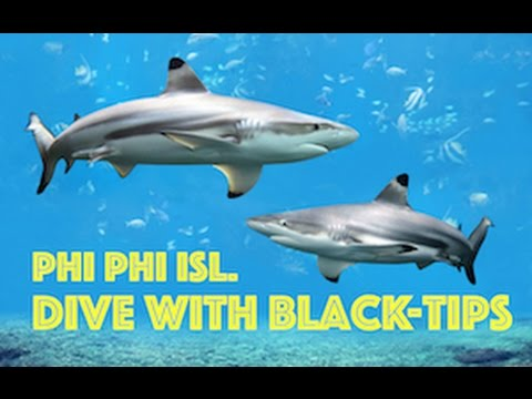 Black-Tip Reef Sharks HD Video, Scuba Diving Koh Phi Phi, Thailand by Freedom Divers, Phuket