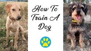 How I Train My Dogs And Teach Them Tricks by ErinsAnimals