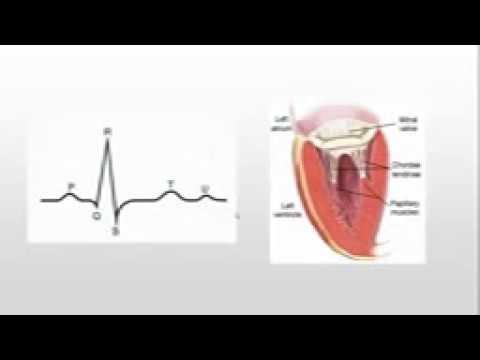 Physiology | ECG | Part 1 | Dr.Mennatullah Shehata
