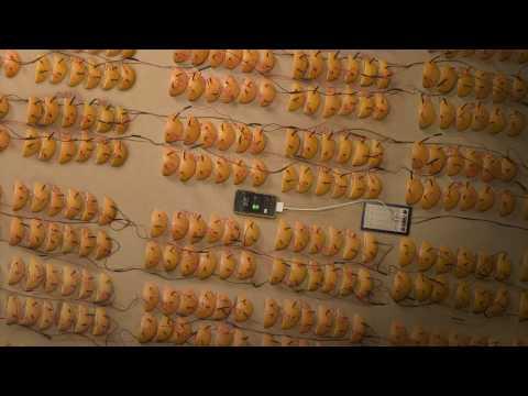Orange Fruit Batteries Power An iPhone