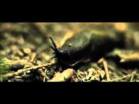 Hike - Horror Trailer HD (2012).
