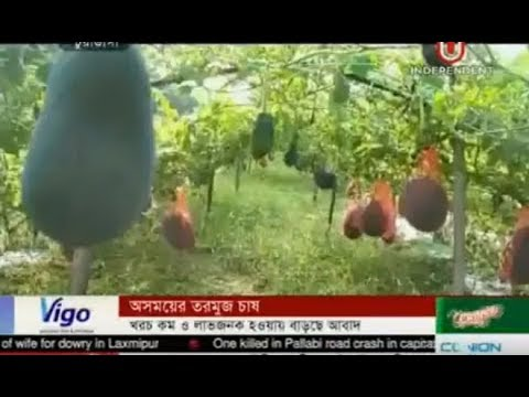 Water Melon Cultivation at Off season (23-04-2018)