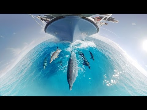 Swimming with Dolphins in 360