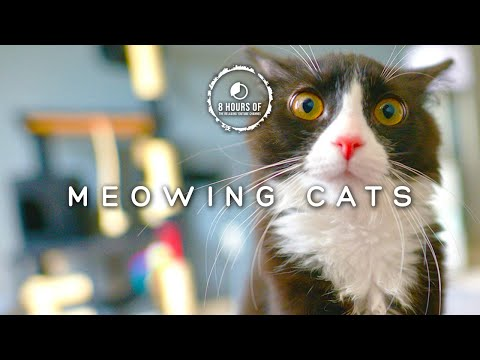 CAT SOUNDS TO ANNOY DOGS, CAT SOUNDS TO SCARE MICE OR TO ATTRACT CATS, 8 HOURS OF CATS MEOWING