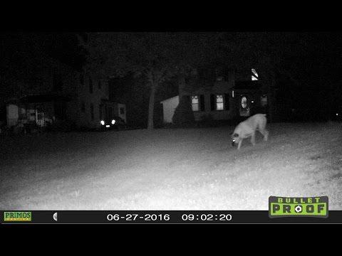 PRIMOS Bullet Proof trail cam SET-UP & TEST.