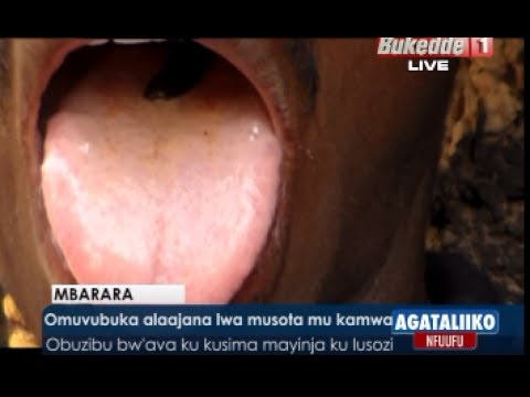 Video Omuvubuka alaajana lwa musota mu kamwa download in MP3, 3GP, MP4, WEBM, AVI, FLV January 2017