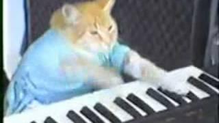 Клавиатурные домашние животные