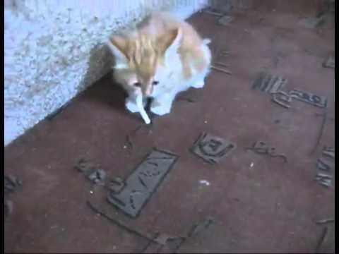 How To Wean Cat Smoking Funny Videos