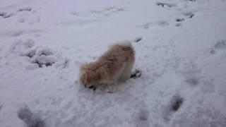 ☆雪遊び☆