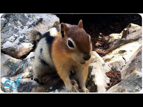 Friendly Chipmunk Says Hello | Adorable Selfie