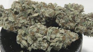 White OG Marijuana Monday by Urban Grower