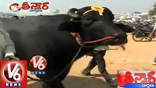 yuvraj the 7 crore worth murrah buffalo teenmaar news