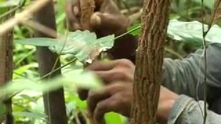 Community Forestry REDD In Cambodia Khmer Language Version