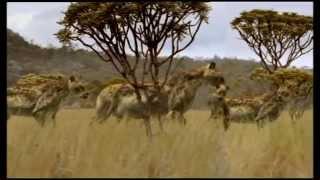 Putování S Pravěkými Zvířaty (5)