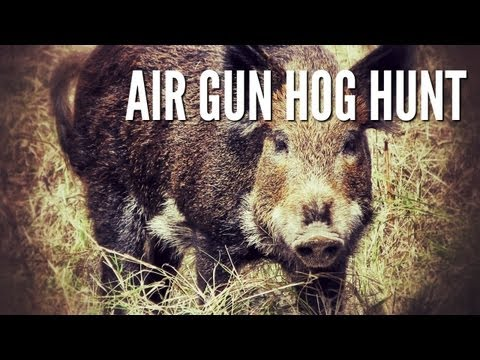 .25 cal airgun - This little piggy went to market! Keith using a GAMO Hunter Extreme .25 caliber to take out a good eating hog in the Texas Hill Country. --------------------...