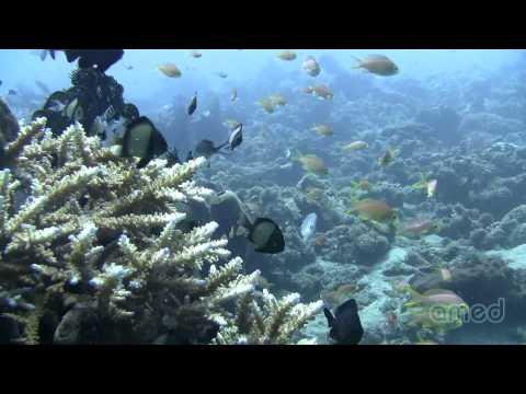 Amed, Bali - Indonesia