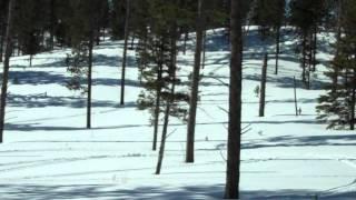 7. Arctic Cat Crossfire 800 H.O. catwalks black hills