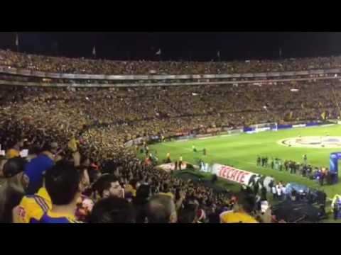 Himno Nacional Tigres Campeón - Libres y Lokos - Tigres