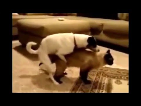 Funny Cats And Dogs Videos - Try Not To Laugh Cats Vs Dogs