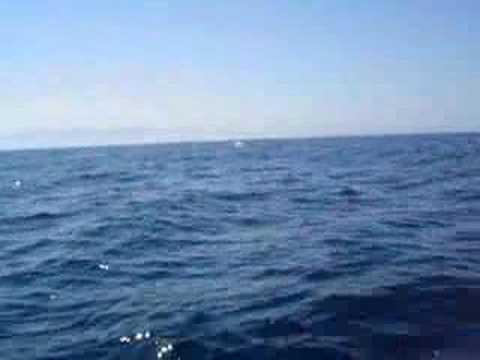 Avistamiento ballena jorobada